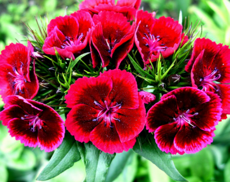 iluvflowers85
